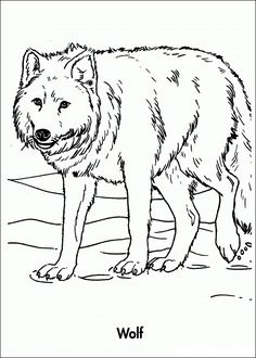 wolf coloring pages for kids free printable wolf coloring pages for kids