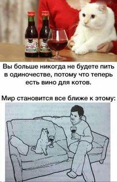 Вино для котов