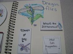 Show & Tell ~ Dragonflies « Homeschool Share blog