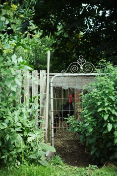 wire gate + chickens