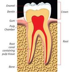 Root Canal Infection Symptoms