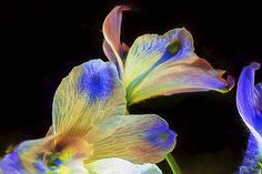 Fleeting Flowers by Maria Coulson