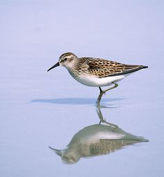 A Sandpiper to Bring You Joy: a great lesson on getting outside of oneself and finding joy amidst trials