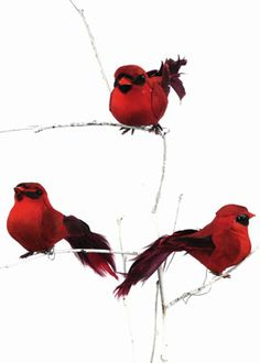 4 in Red Birds, Set of 12