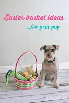 Easter for your Furry Friends | #EasterBasketHop