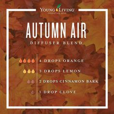 essential oil blends for jet lag essential oils for anxiety in dogs young living Fall Essential Oils, Helichrysum Essential Oil, Essential Oils For Babies, Essential Oil Diffuser Blends, Young Living Essential Oils, Aromatherapy Diffuser, Clove Essential Oil, Doterra Oil Diffuser, Sweet Orange Essential Oil