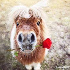 For Horses - pferde - Animales Pretty Horses, Horse Love, Beautiful Horses, Animals Beautiful, Horse Girl, Hello Beautiful, Cute Funny Animals, Cute Baby Animals, Farm Animals