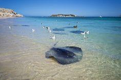 _DSC8066 Western Australia, Tourism, Surfing, Coast, River, World, Photography, Outdoor, Turismo
