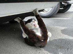 うし君の写真が出てきた。 色んな意味ですごい猫だったんですよ