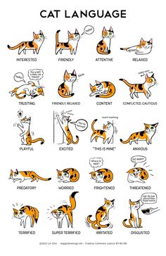 Cat body language with other cats cat ears flattened sideways,cat posture meaning how to learn cat language,what does cat behavior mean what does it mean when cats ears go back. I Love Cats, Crazy Cats, Cute Cats, Funny Cats, Funny Animals, Cute Animals, Cute Cat Names, Adorable Kittens, Funny Horses
