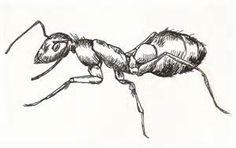 sketch ant - Bing images