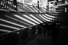 Stripes and the city: the great zebra print takeover of Tokyo – in pictures