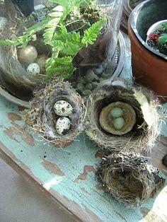 tapestries of nature: bird nest