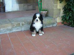 A Swiss dog in Tuscany