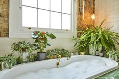 Biophilic & Sustainable Interior Design · 8 Best plants and flowers against indoor air pollution · DforDesign Indoor Ferns, Indoor Plants, Hanging Plants, Bathtub Decor, Boston Ferns, Fern Plant, Cool Plants, Plant Decor, Plant Wall