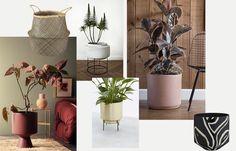 Wieder schwer im Kommen: Zimmerpflanzen