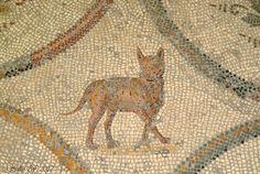 mosaic cat – bardo museum