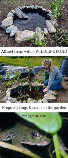 Building a Wildlife Pond in the Vegetable Garden Build a small pond in the garden to attract frogs. Frogs are an organic gardener's best friend since they love eating slugs and other garden pests. Ponds For Small Gardens, Small Ponds, Organic Gardening, Gardening Tips, Vegetable Gardening, Gardening Magazines, Gardening Quotes, Gardening Books, Indoor Gardening