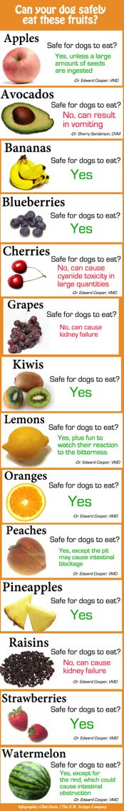 What fruits dogs can and cannot eat
