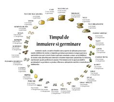 TIMPUL DE INMUIERE SI GERMINARE A NUCILOR SI SEMINTELOR Raw Vegan Recipes, Cooking Recipes, Healthy Recipes, Slow Food, Food Facts, Human Nature, Try It Free, Vegan Life, Superfoods