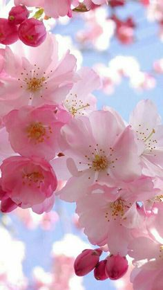 Cherry pink blossoms.