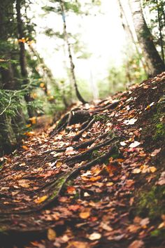 The beautiful smell of fall.. Damp leaves resting on the forest floor...