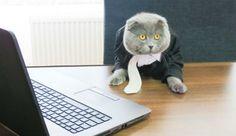 部下になりたい! ルーマニアの企業で猫のディレクター爆誕