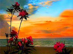 Sunset - Sunsets Wallpaper ID 1117974 - Desktop Nexus Nature