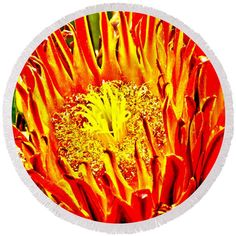 Get ready for #summer with this Flower #Round #Beach #Towel featuring the photograph #Cactus #Flower by Judi Saunders