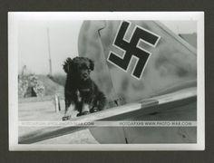 photo archive | Photo-war.com
