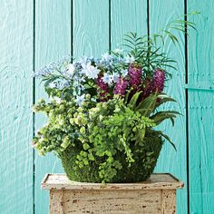 Evoke The Feel Of The Forest   Indoor Container Gardening Ideas