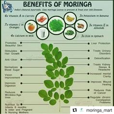 Miracle Diets - Benefits Of Moringa For More www. - The negative consequences of miracle diets can be of different nature and degree. Healing Herbs, Natural Healing, Moringa Oleifera Benefits, Benefits Of Moringa Leaves, Herbal Remedies, Health Remedies, Calcium In Milk, Moringa Recipes, Home Remedies