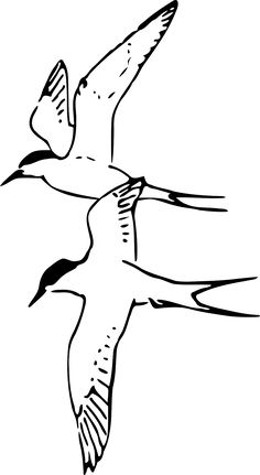 Terns Birds Flying Arctic Birds transparent image