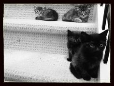 Cats at The Bar: Step Kittens! check this fantastic photo from Katzenworld