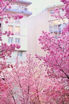Amazing bloom