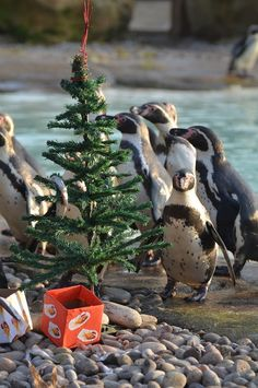 penguins waiting for me under the christmas tree!