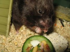 I was trying to find some homemade foods for a hamster and this site is just straight up adorable!! =^.^=
