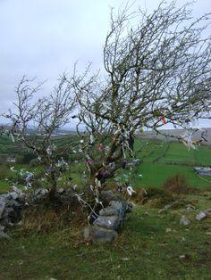 Fairy Tree- The Burren. I MUST go back to Ireland. like, soon.