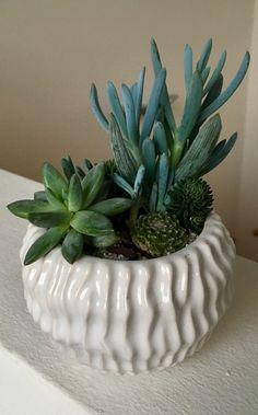 Succulent Arrangements, Succulents, Picture Design, Planter Pots, Ceramics, Plants, Gifts, Art, Ceramica