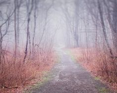 Winding Path in Fog - fine art Maine landscape photography print by Allison Trentelman - Rocky Top Studio