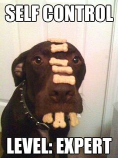Funny Animal Pictures To Make You Laugh Funny Animal - This dog has some serious self control that will make you laugh