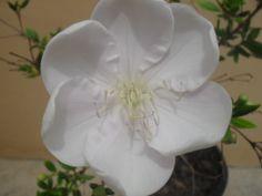 A mais delicada flor!