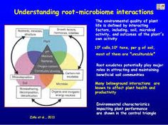 root microbiome - Google Search