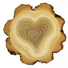 heart shaped tree-※