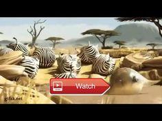 😸 amazing funny video animal 🐶 amazing funny video animal 🎠 on Pet Lovers 🐼