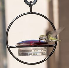 """Love this """"Love Hummingbirds? We do too :) You'll love this Best Glass Bee & Wasp Proof Hummingbird Feeder + Skinny Ant Moat Bundle. It Attracts Hummers Like Crazy and its the perfect gift idea for moms, grandmas, women, hummingbird lovers or even yourself :) #hummingbird #hummingbirds #hummingbirdfeeder #hummingbirdgifts #WeLoveHummingbirds Glass Hummingbird Feeders, Humming Bird Feeders, Hummingbird Nectar, Hummingbird Garden, Squirrel Proof Bird Feeders, Like Crazy, Glass Replacement, Hummer, Hummingbirds"""