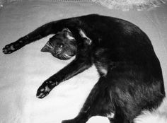 No worries Cat Sleeping, Have A Laugh, Cats, Funny, Animals, Gatos, Animales, Animaux, Funny Parenting