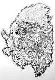 Les 23 Meilleures Images Du Tableau Poisson Combattant Sur Pinterest