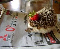 A Hedgehog... with a strawberry