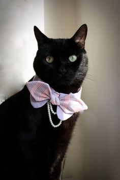 Slipping a bow tie around your cat's collar can be a smart compromise between looking dapper and keeping your feline comfortable. In celebration of August 28 being Bow Tie Day, here's a salute to some very fancily-dressed cats. Dog Clothes Patterns, Pet Fashion, Cat Accessories, Cat Collars, Dog Bowtie, Dog Bandana, Pet Clothes, Cat Gifts, Beautiful Cats